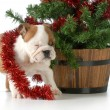 Christmas puppy — Stock Photo #39857283