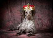 Spoiled dog — Stock Photo