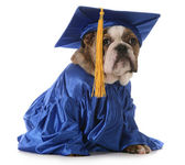 Puppy school — Stock Photo