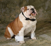 Dog smoking cigar — Stock Photo