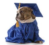 Pet graduation — Stock Photo