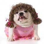 Female dog — Stock Photo #42571987