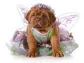 Cachorro hembra — Foto de Stock