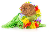 Hula dog — Stockfoto