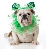 St. Patricks Day dog — Stock Photo