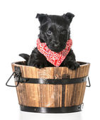 Puppy in a bucket — Stock Photo