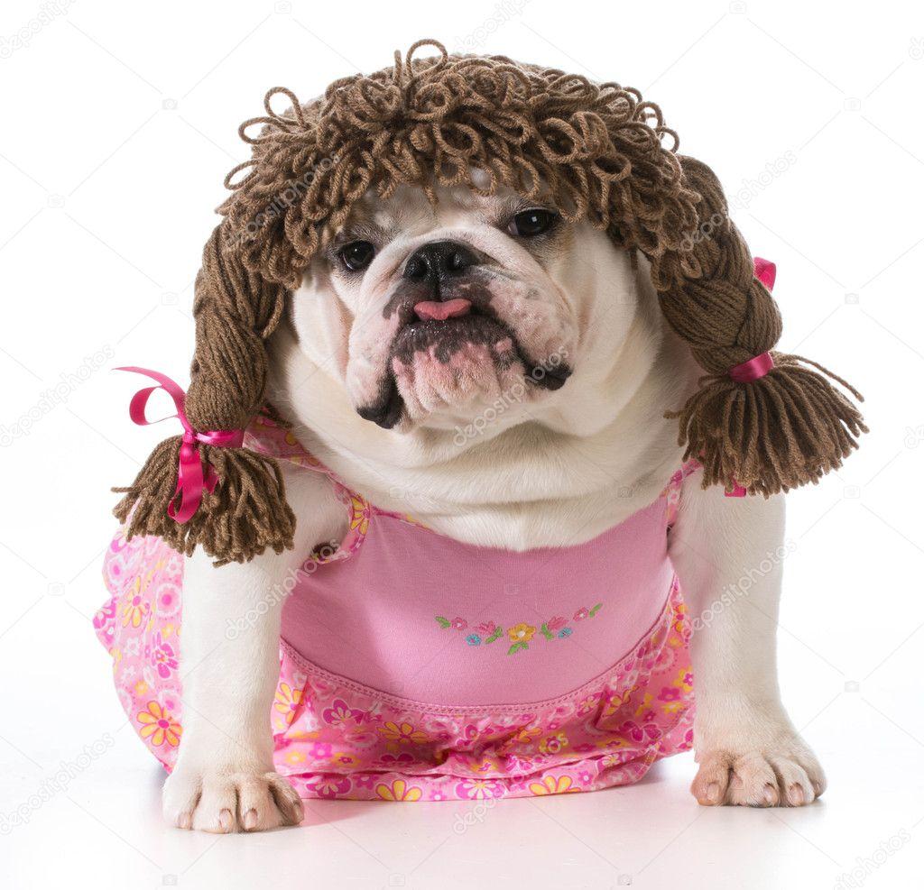 Small Dog Iwth Wig
