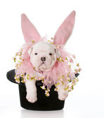 Dog dressed as a rabbit — Stock Photo
