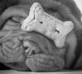 Perro con un hueso — Foto de Stock