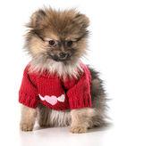 Amor de cachorro — Foto de Stock