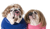 Pareja de perro — Foto de Stock