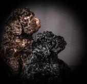 Camada de cachorros — Foto de Stock