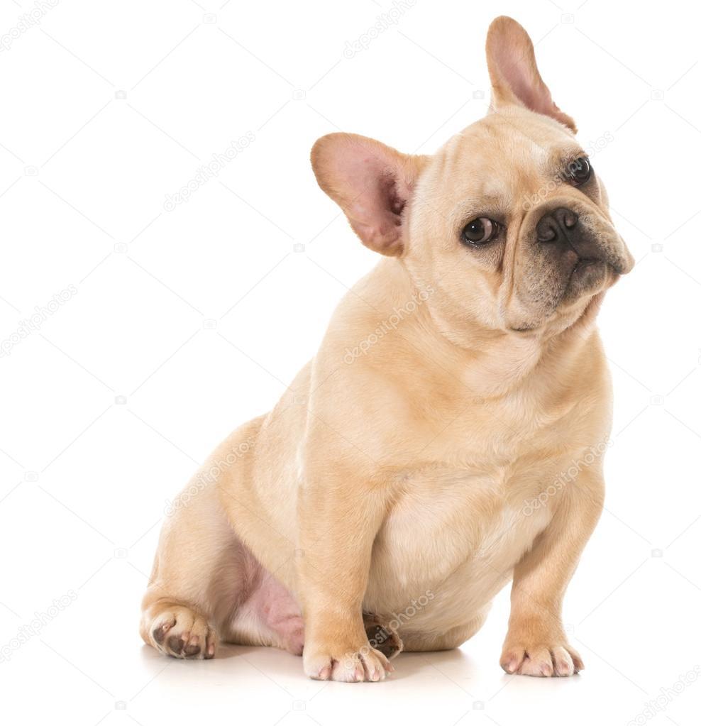 可爱的小狗 — 图库照片08willeecole#44857455