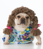 Perro hembra — Foto de Stock