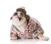 Female dog — Stockfoto