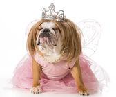 Spoiled dog — Stok fotoğraf