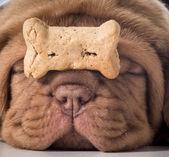 Dog with a bone — Stock Photo