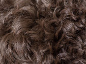 Curly dog hair — 图库照片