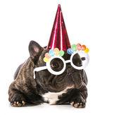 生日的狗 — 图库照片
