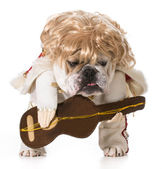 Hound dog — Stock Photo
