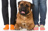 Bullmastiff and  owners — Stock Photo