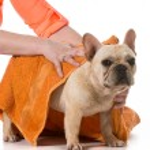 Dog grooming — Stock Photo #47095245