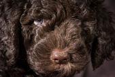 Lindo cachorro — Foto de Stock