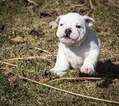 Cão a brincar lá fora — Fotografia Stock