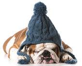 Hund bär vinter mössa — Stockfoto