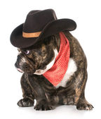 Country dog — Stock Photo