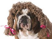 Female dog — Stock Photo