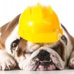 Working dog — Stock Photo #51196943