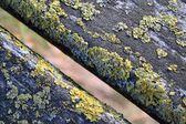 Mossy wood — Stock Photo