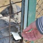 Feed rabbit at zoo — Stock Photo #47448451