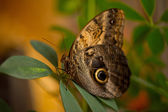 Butterfly on leaf — Stock Photo