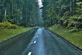 Samotna droga w lesie — Zdjęcie stockowe
