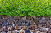 The tree and stone design for decorate garden. — Stock Photo