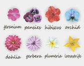 цветы — Cтоковый вектор