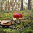 Mushroom with red hat — Stock Photo