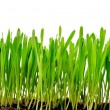 Isolated green grass — Stock Photo