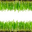 Isolated green grass — Foto de Stock