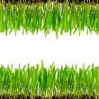 Royalty-Free Stock Photo: Isolated green grass
