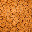 Dry cracked earth - Stock Photo