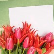 Flowers with congratulatory blank — Stockfoto