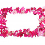 Frame made of petals — Stock Photo