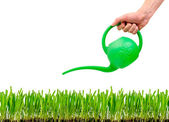 Grass being watered with watering can — Stock Photo