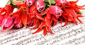 Red tulips with music sheet page — Stok fotoğraf