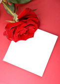 Rose with card. — Stock Photo
