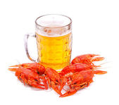 Beer with lobsters — Stock Photo