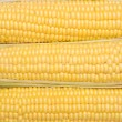 Background from the cob of corn — Foto de Stock